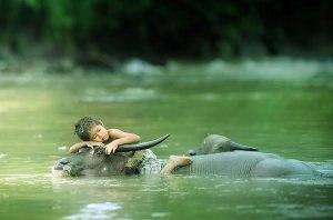 boy-sleeping-on-bull